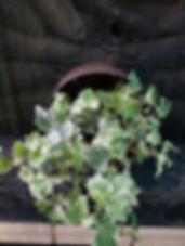 pottet-plants-2.jpg