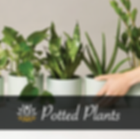 POTTED-PLANTS.png