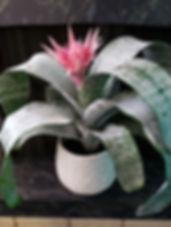 pottet-plants-3.jpg