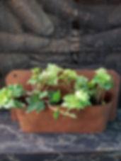 pottet-plants-1.jpg