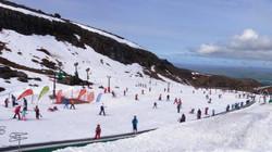 Turoa - Alpine Meadow