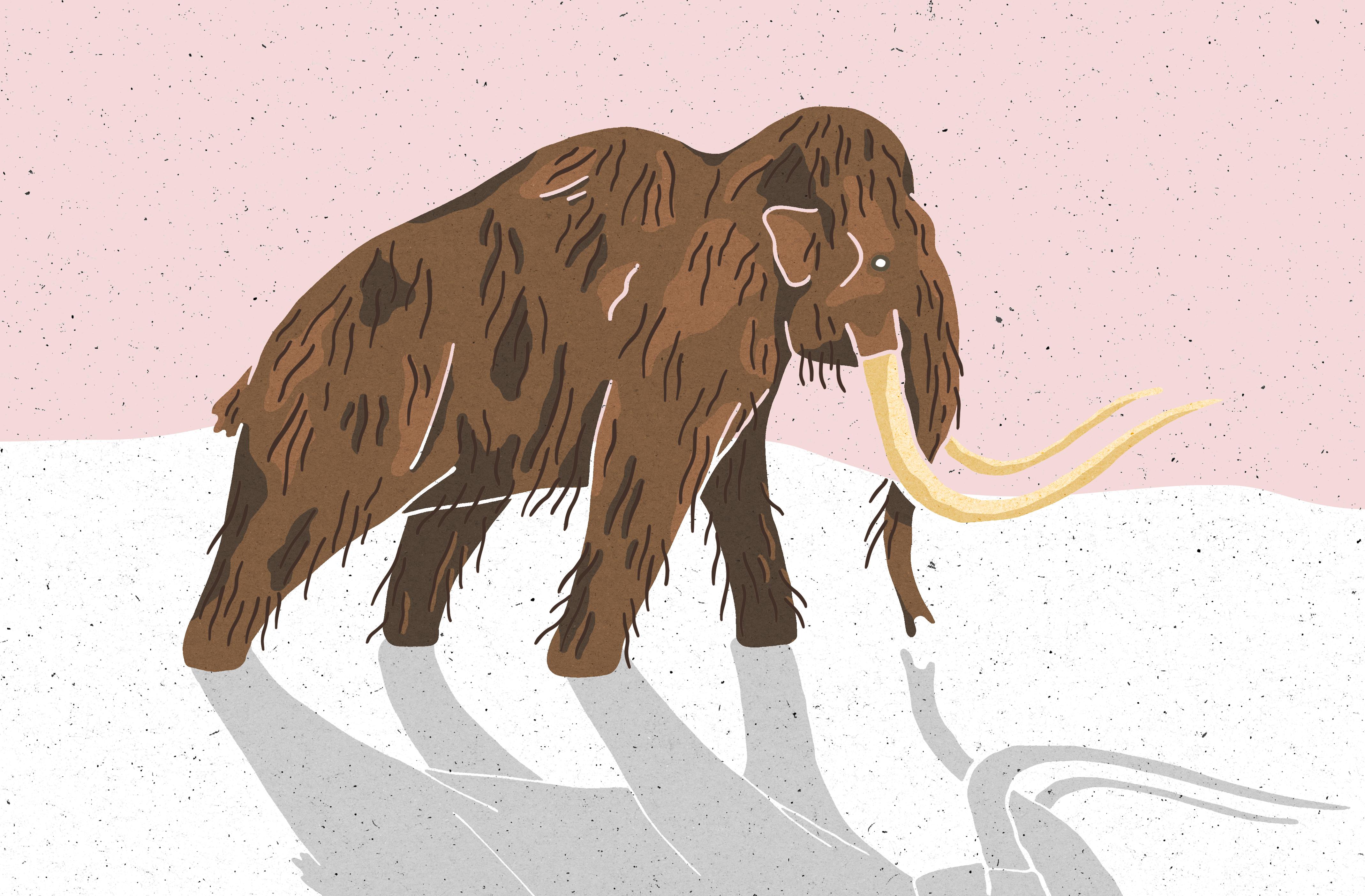 Mammoth Pink