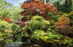 Japanese Garden, Clingendael Park, The Hague