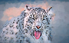 Snow Leopard portrait, photoart copyright Philip Preston