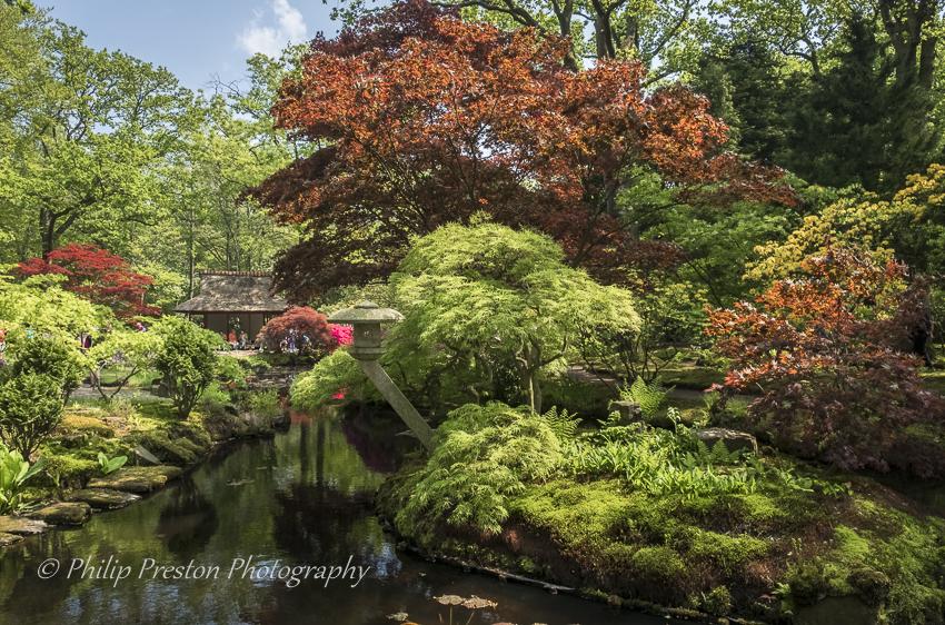 Japanese Garden, Den Haag