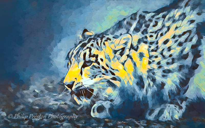 Abstract Snow Leopard