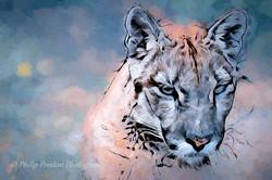 Puma / Cougar