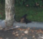 HR 714 monkey pooping.jpg