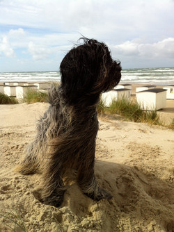 Folmer på stranden