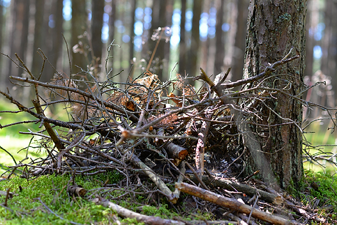 Brush-pile-Dollarphotoclub_89073758-Goog