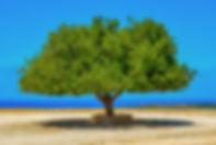 tree-3508372_1920.jpg