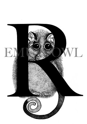 Ring tail Possum Letter R