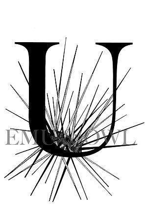 Urchin Letter U