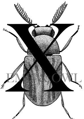 Xyletinus Beetle Letter X