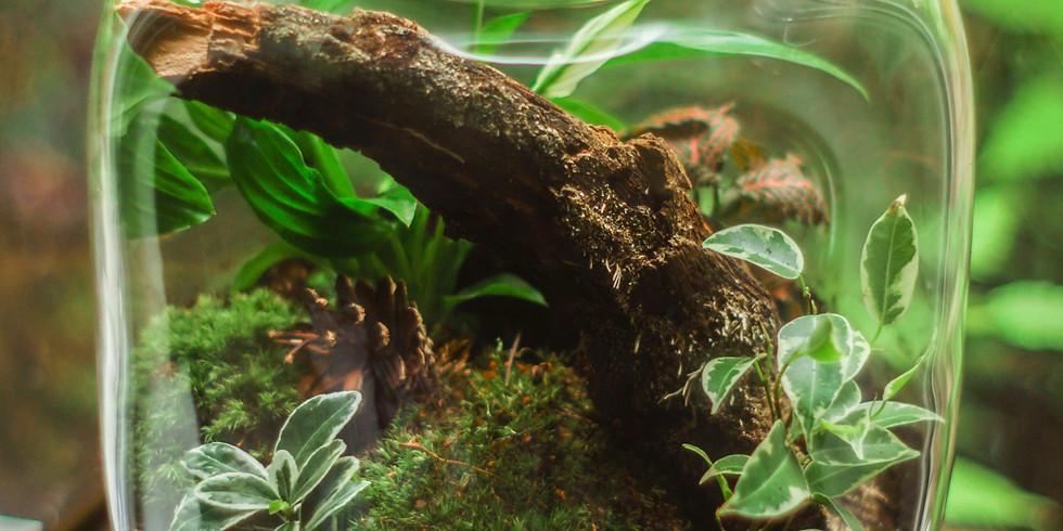 Création d'un terrarium tropical
