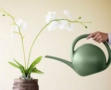 orchid-watering-basics-2-300x246.jpg