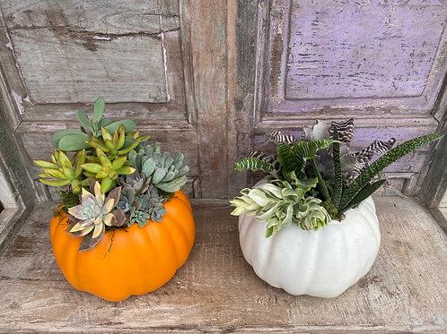 Pumpkin Succulent Potting Workshop | Oct 9
