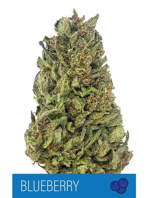 Blueberry CBD Flower 17.33%