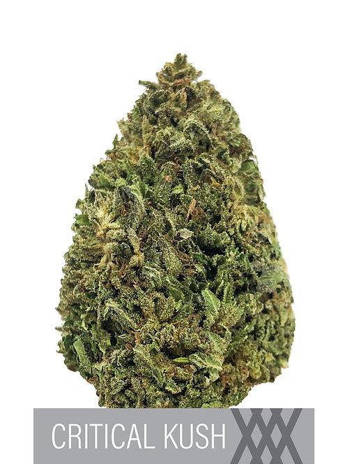 Critical Kush CBD Flower- 15.7% CBD