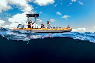 hydrophone liste whales dolphins azores logistics