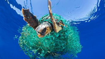 Pelagic Environment   Coastal Floating Marine Litter   Lixo marinho flutuante costeiro