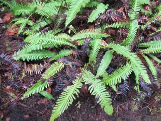 Gallery of Azorean plants