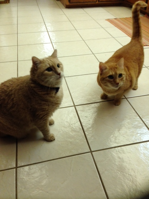 Mimi & Gigi