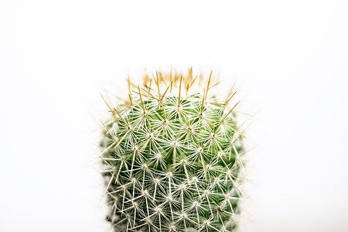 Succulent Prick