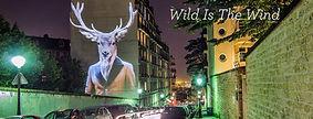 'Wild is the Wind'