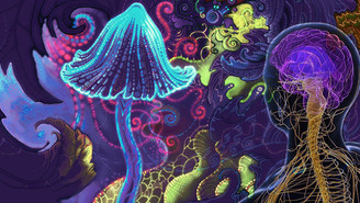 Psilocybin Inhibits The Processing Of Negative Emotions In The Brain