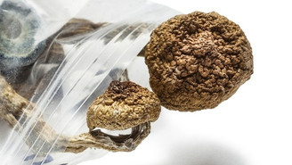 Johns Hopkins Study Finds Psilocybin's 'Sweet Spot' For Lasting Positive Effects