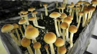 Psilocybin Is Having A Profound Impact On Managing Anxiety And Depression In Clinical Settings