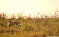 Such a slender wildcat!