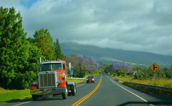 On our way to lavender farms, Maui