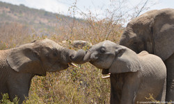 Hugging baby elephants!