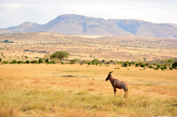 The endless plains of Mara...