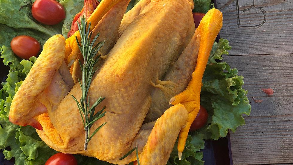Pollo da cortile