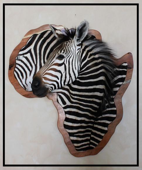 Hartmann's Zebra