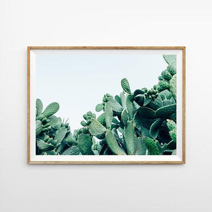 Cactus IV
