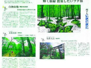 日本経済新聞で白神山地が掲載されました!