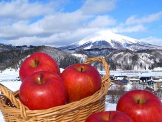 ~今年もやります!世界自然遺産白神山地の雪中貯蔵りんご!~