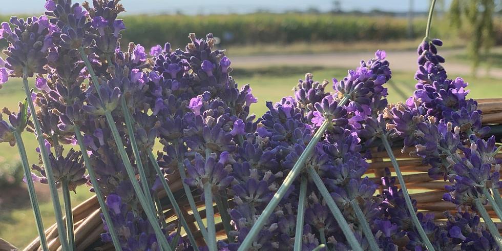 Lavender Honey Tea Flow