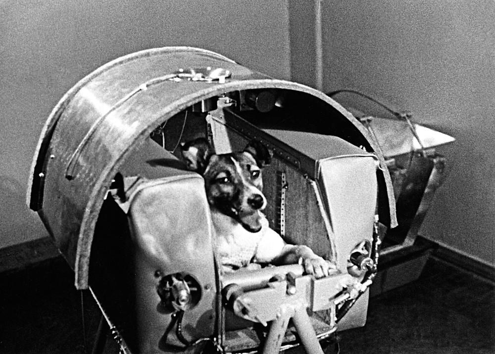 Laika - canine space pioneer