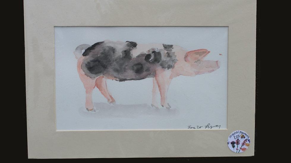 Original Pig Watercolour Painting