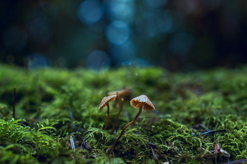 close-up-photo-of-mushrooms-1643403 (1).