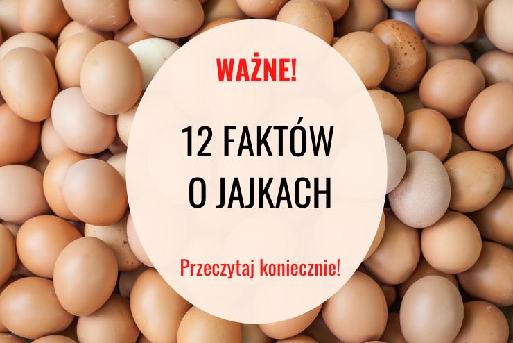 12 Faktów O Jajkach