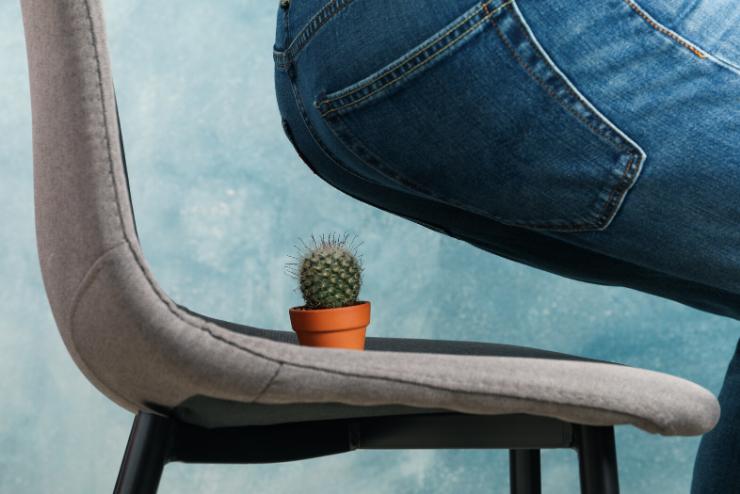 kaktus na krześle