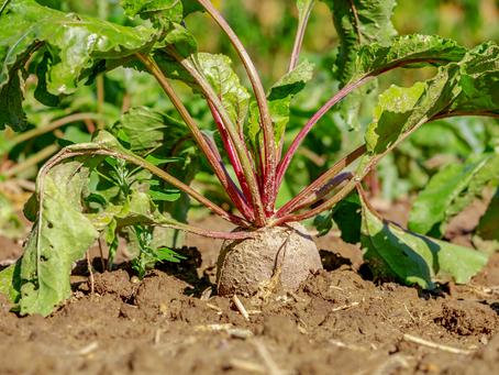 5 warzyw z największą ilością potasu!