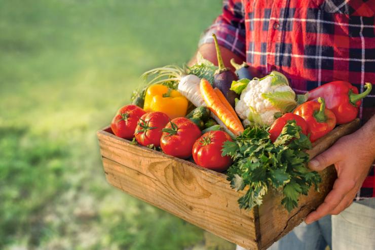 warzywa w skrzynce
