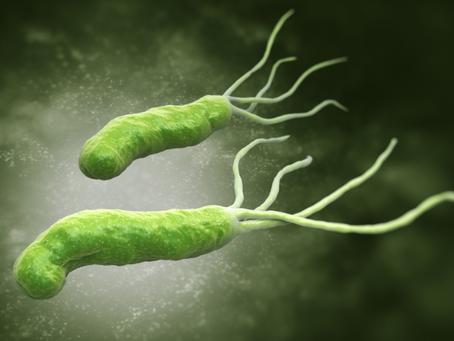 Skąd Helicobacter?